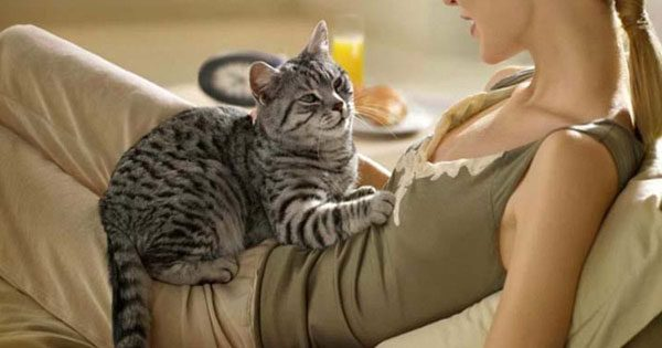 Кошка топчется на животе девушки