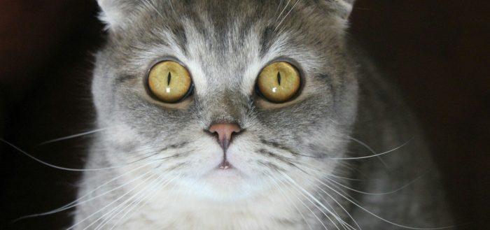 кошка удивленная