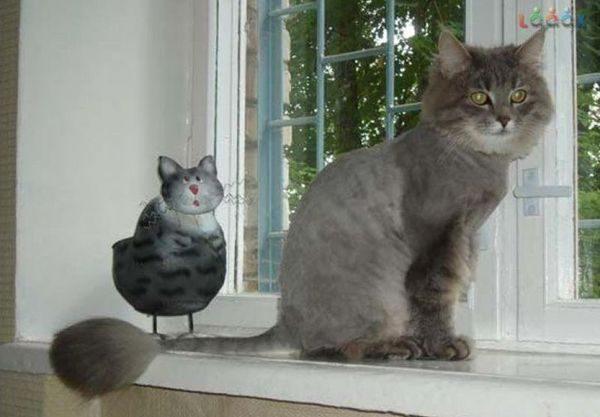 Кошка после стрижки
