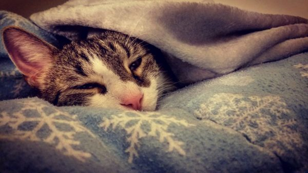 кошка в тёплом месте