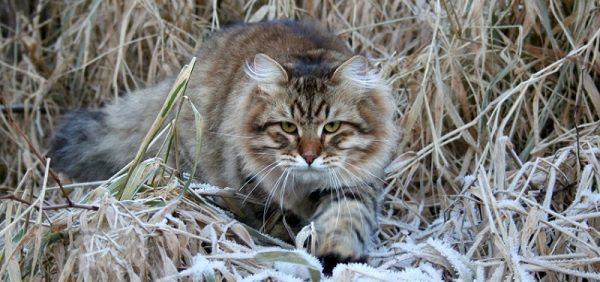 Кошка в зарослях