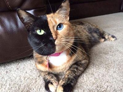 Кошка возле кресла