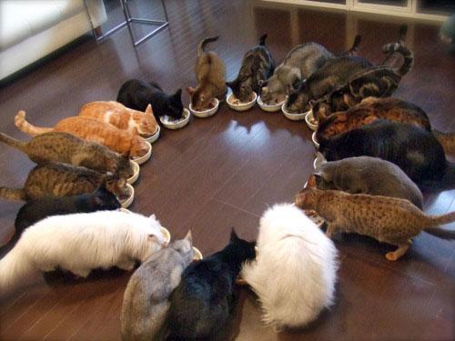 Кошки едят в кругу