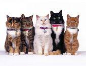 Кошки в ошейниках