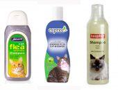 кошку моют шампунем