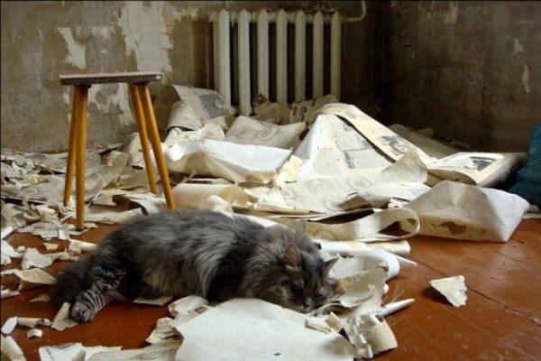 кот лежит на оторванных обоях