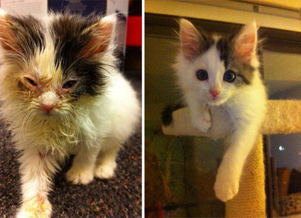 Уличный котёнок до и после