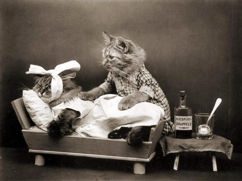 Постановка капельницы кошке