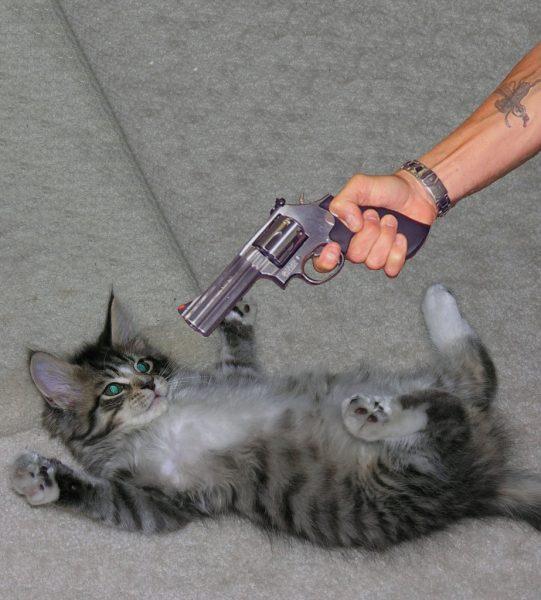 На кота направлен игрушечный пистолет