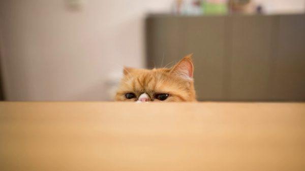Кот и стол
