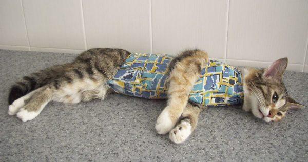 кошка лежит после операции