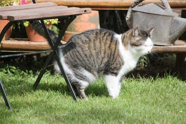 Кот метит скамейку