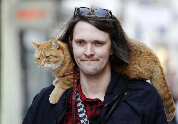 Кот на плече у хозяина