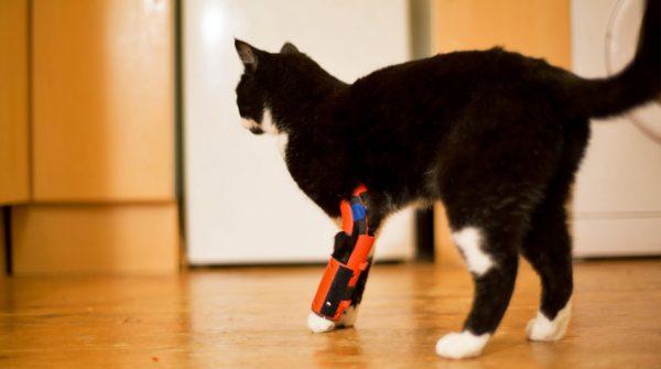 Кот на протезе