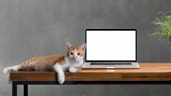 Как перевоспитать кота и отучить его лазить на стол