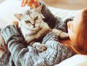 Кот на руках у девушки
