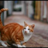кот на улице