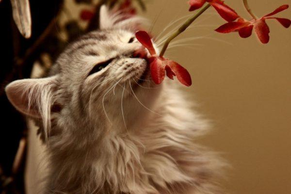 Кот нюхает цветы