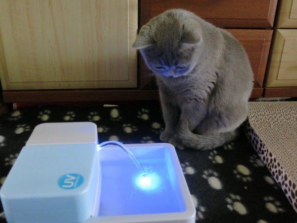 Кот заинтересован автопоилкой