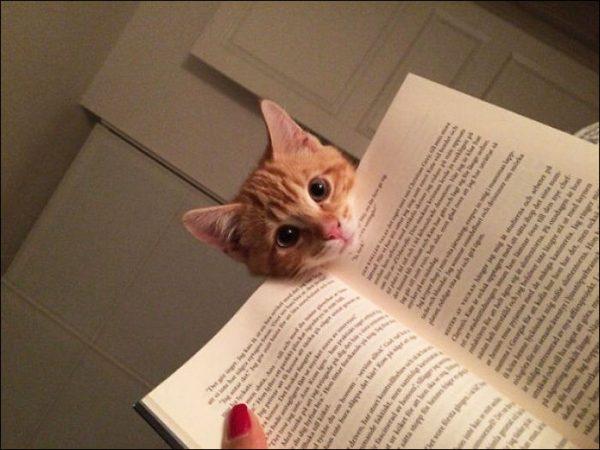 Кот положил голову на книгу, мешая хозяйке читать