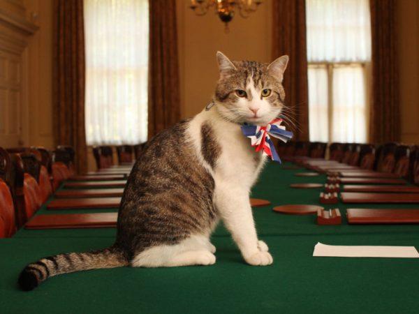 Кот премьер-министра Ларри