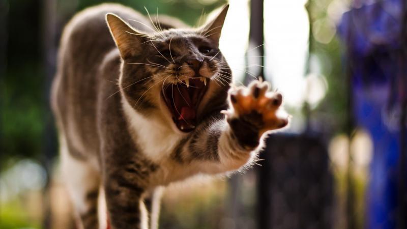 Белоснежные зубы у кошки: косметическая прихоть или сохранение здоровья питомца