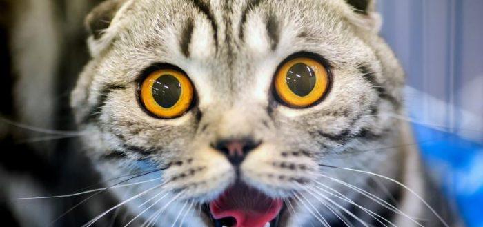 Кот с удивлёнными глазами