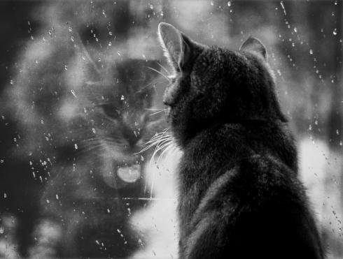 Кот смотрит в стеклянное окно
