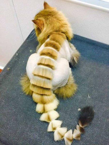Кот со стрижкой дракон