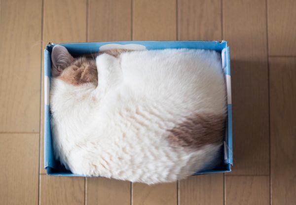 Кот свернулся калачиком в коробке