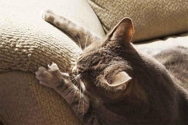 Кошка точит коготки