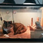 Кот в террариуме