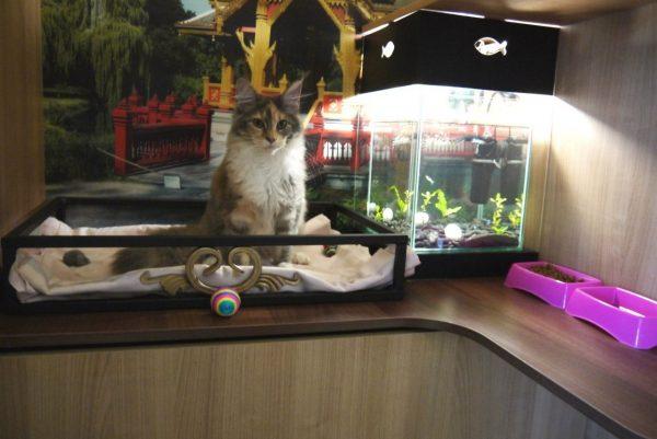 Кот в гостинице для животных