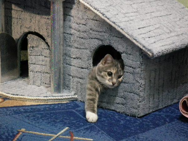 Кот в кошачьем домике