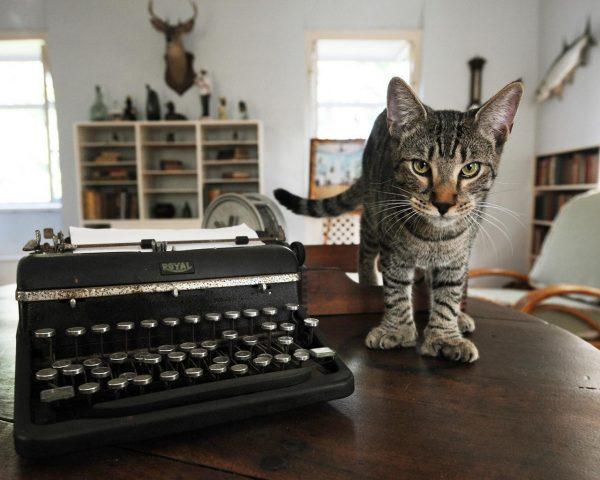 Кот в музее Хемингуэя