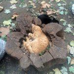Кот в пне