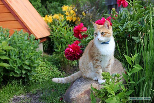 кот среди цветов в саду