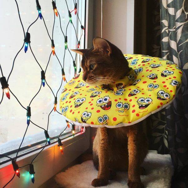 Кот в самодельном поролоновом воротнике из ткани