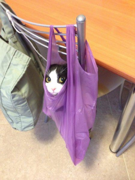 Кот в сиреневом пакете