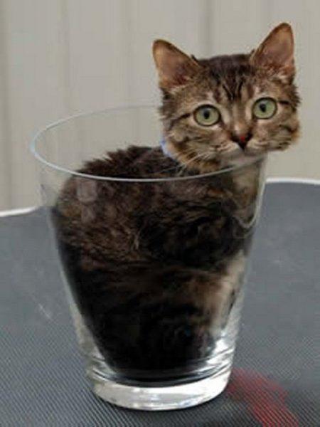 Кот в стакане