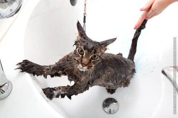 кота купают