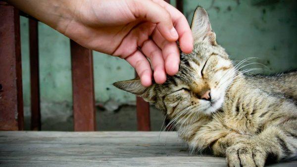 Кота нужно хвалить и ласкать