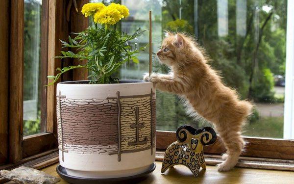 Какого запаха боятся кошки чтобы не гадили