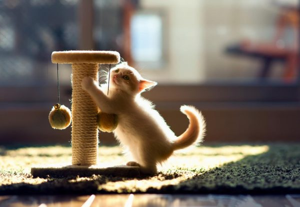Котёнок и кошачьи игрушки