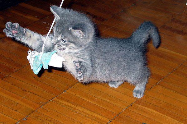 Котёнок играет с бантиком