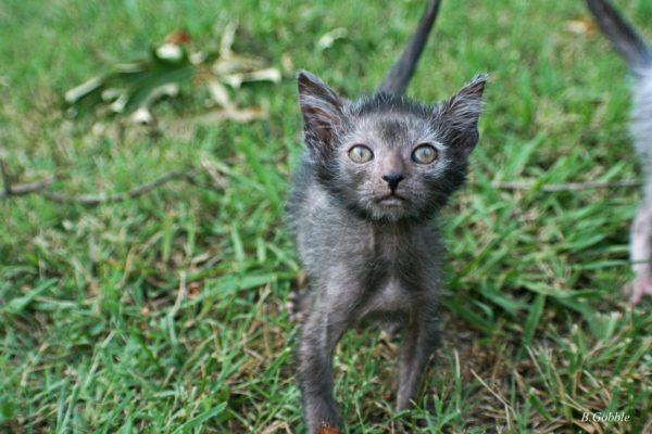Котёнок ликой в траве