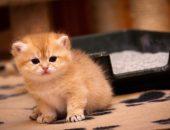 Котёнок на фоне лотка