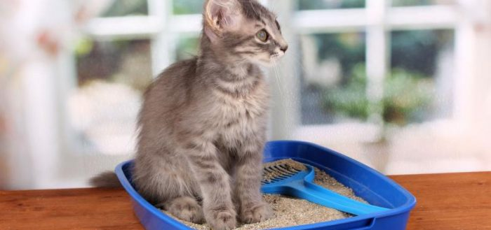 Котёнок на лотке