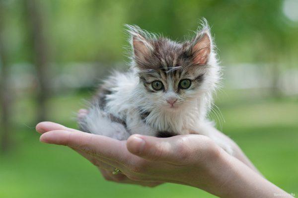 Котёнок на руках