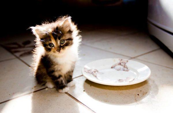 Котёнок перед пустой тарелочкой